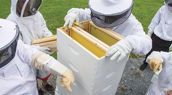 fall2015-beekeepers-02